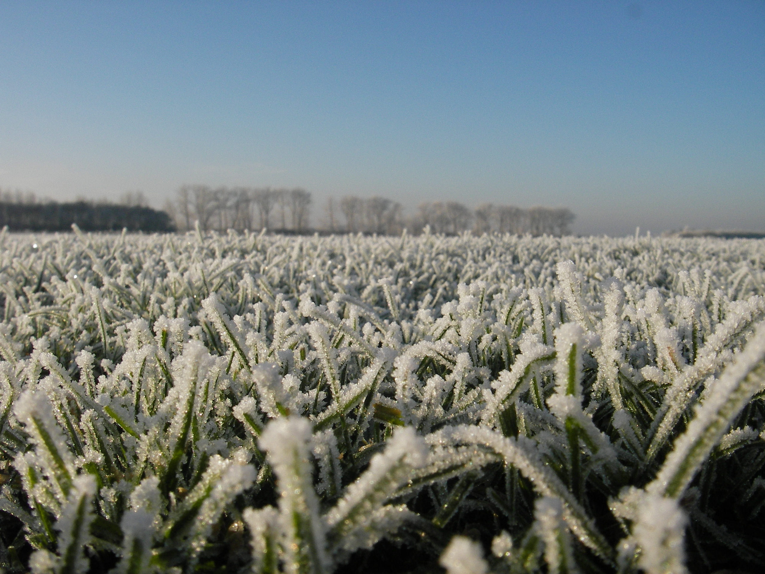 Jack Frost on the Lawn | Qlawns Blog