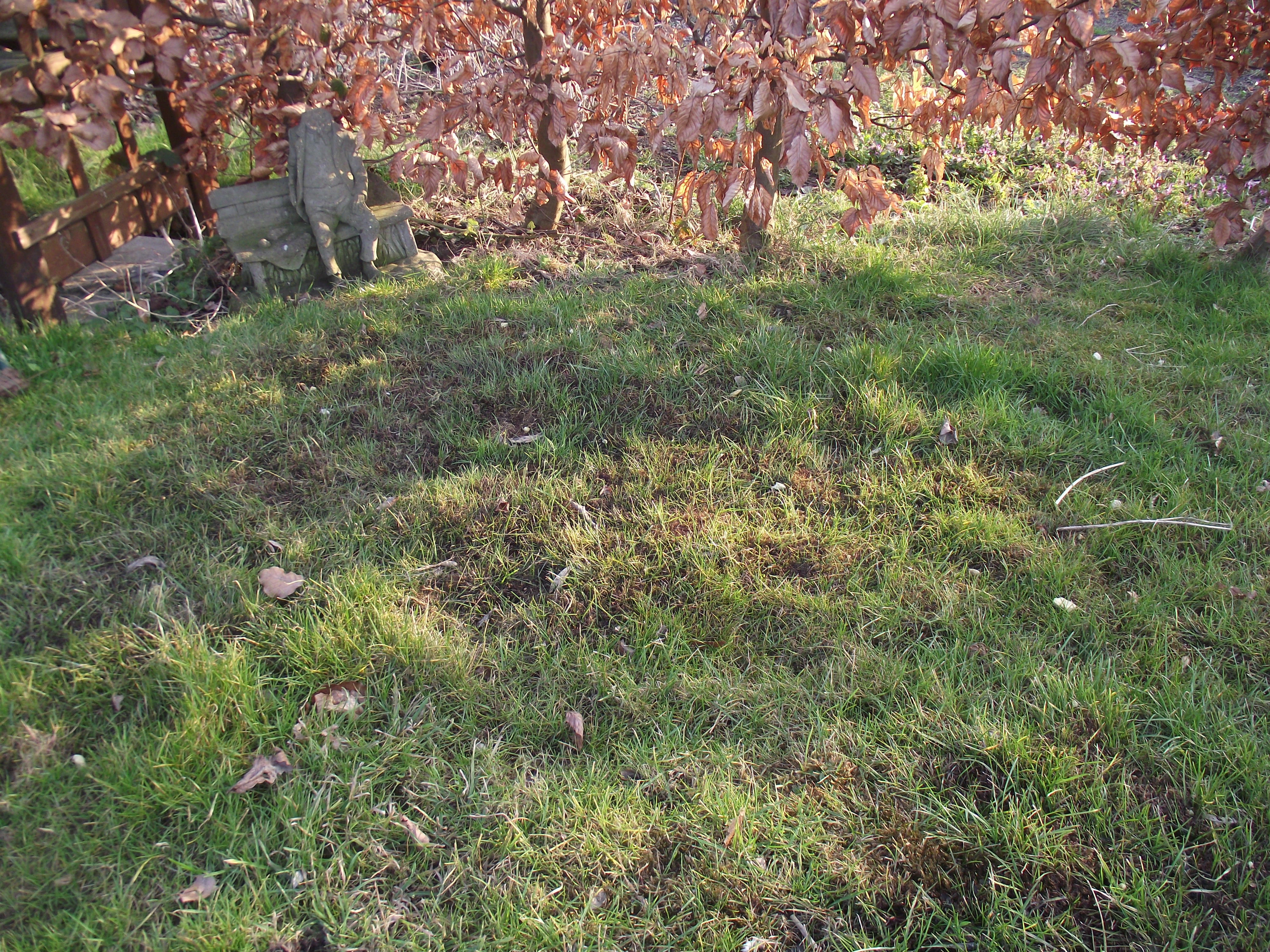 how to add nitrogen to lawn